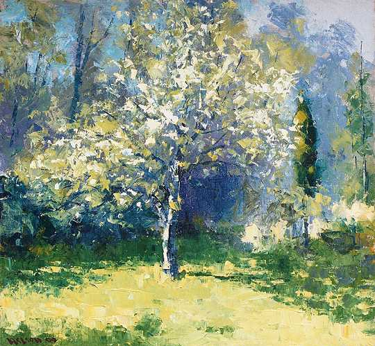 Pear Tree, Afternoon Light