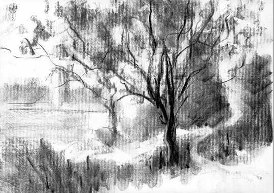 Hawthorne Trees, Spring