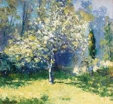 Pear Tree, Afternoon Light